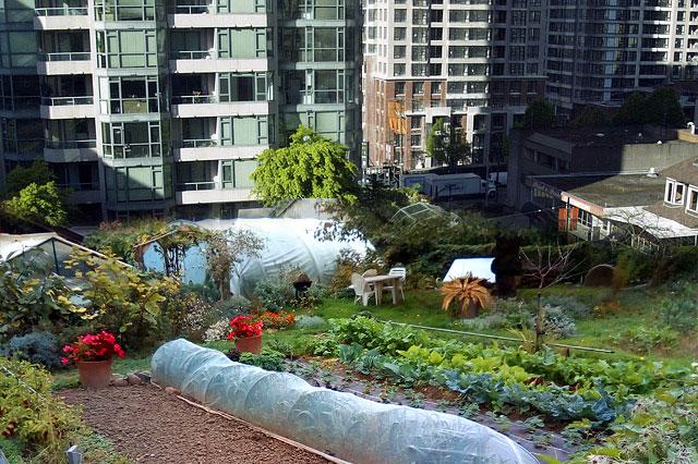 jardin partagés