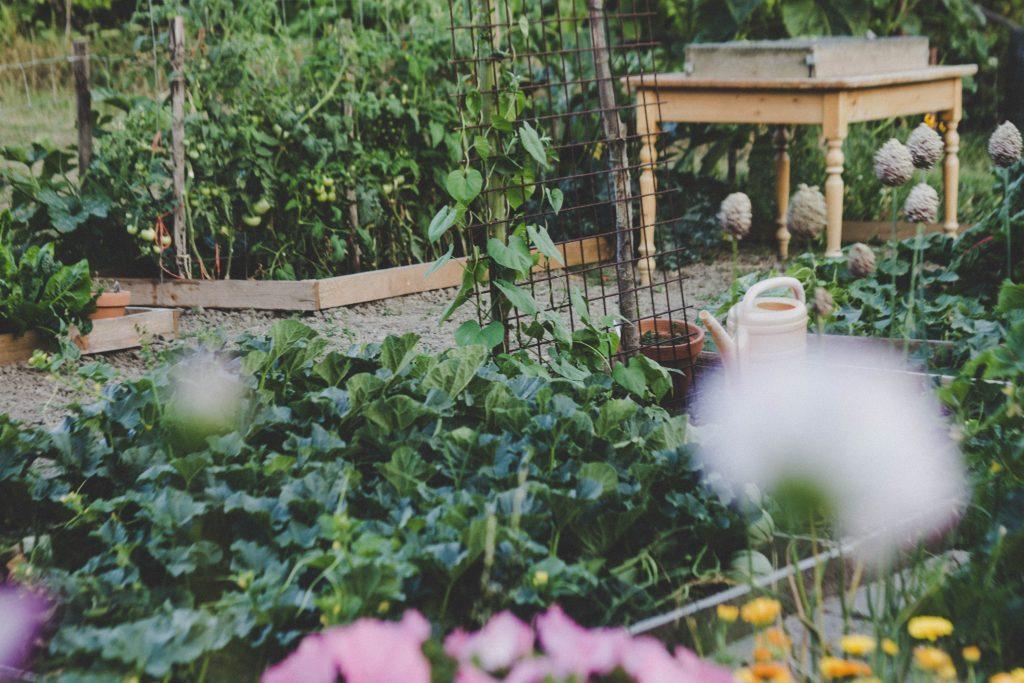 Un jardin potager avec des legumes