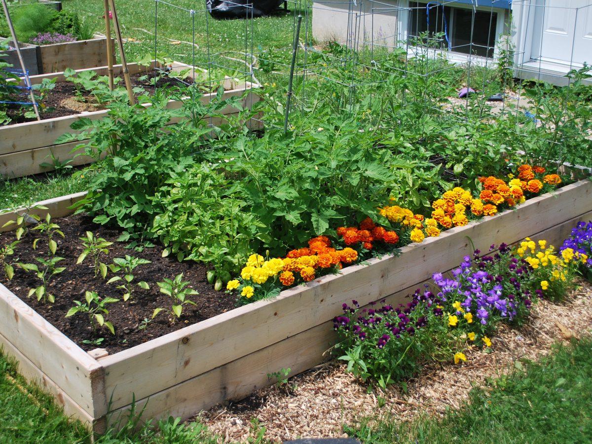 mon-jardin-bio-on-plante-quoi-de-beau-mois-de-mars