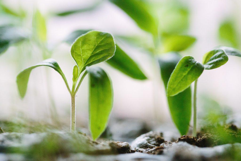 Plantes et jeunes pousses