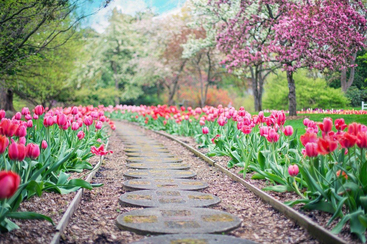 chemin en pierres entouré de fleurs